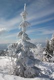 зима вала снежка Стоковое фото RF