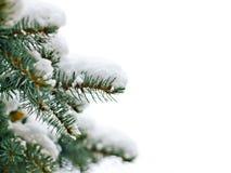 зима вала сосенки Стоковое фото RF
