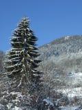 зима вала сосенки Стоковая Фотография
