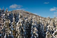зима вала Стоковые Изображения RF