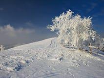 зима вала Стоковое фото RF