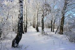 зима вала Стоковые Изображения
