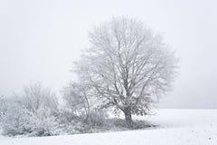 зима вала Стоковое Изображение