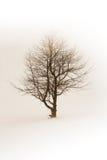 зима вала Стоковая Фотография RF