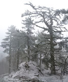 зима валов гор Стоковое фото RF
