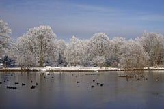 зима валов пруда ландшафта Германии стоковое фото rf