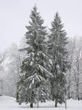 зима валов Стоковые Фото