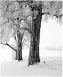 зима валов Стоковые Фотографии RF