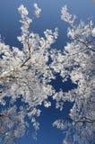зима валов Стоковая Фотография RF