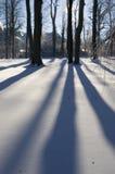 зима валов Стоковые Изображения