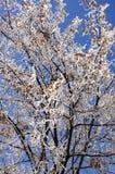 зима вала изображения конструкции Стоковое Изображение RF