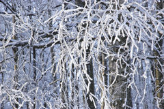 зима вала изображения конструкции Стоковые Фотографии RF