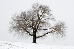 зима вала изображения конструкции Стоковая Фотография RF