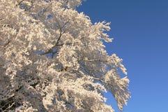 зима вала изображения конструкции Стоковые Изображения