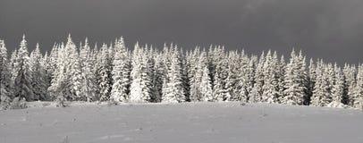 зима валов голубого ясного неба утра ели снежная Стоковая Фотография RF