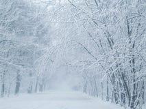 зима валов парка природы в январе заморозка дня снежная Стоковое Изображение