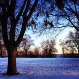 зима валов парка природы в январе заморозка дня снежная Стоковые Фото