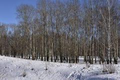 зима валов парка природы в январе заморозка дня снежная Стоковые Изображения RF