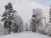 зима валов снежка неба лож заморозка мрачного дня ветвей сини Стоковые Изображения RF