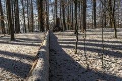 зима валов снежка неба лож заморозка мрачного дня ветвей сини Стоковое фото RF