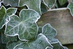 зима вегетации стоковая фотография