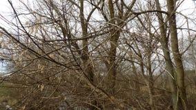 зима вектора иллюстрации предпосылки красивейшая ландшафт пущи дня солнечный Большие предпосылки деревьев Стоковая Фотография
