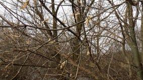 зима вектора иллюстрации предпосылки красивейшая ландшафт пущи дня солнечный Большие предпосылки деревьев Стоковые Изображения