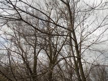 зима вектора иллюстрации предпосылки красивейшая ландшафт пущи дня солнечный большие валы Стоковая Фотография
