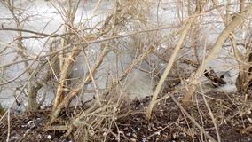 зима вектора иллюстрации предпосылки красивейшая ландшафт пущи дня солнечный большие валы Стоковая Фотография RF