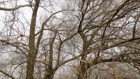 зима вектора иллюстрации предпосылки красивейшая ландшафт пущи дня солнечный большие валы Стоковые Фото
