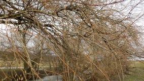 зима вектора иллюстрации предпосылки красивейшая ландшафт пущи дня солнечный большие валы Стоковые Изображения