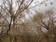 зима вектора иллюстрации предпосылки красивейшая ландшафт пущи дня солнечный большие валы Стоковое фото RF