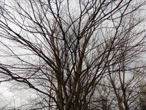 зима вектора иллюстрации предпосылки красивейшая ландшафт пущи дня солнечный Большое дерево Стоковые Изображения