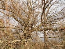 зима вектора иллюстрации предпосылки красивейшая ландшафт пущи дня солнечный Большое дерево Стоковое Изображение