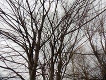 зима вектора иллюстрации предпосылки красивейшая ландшафт пущи дня солнечный Большое дерево Стоковые Изображения RF