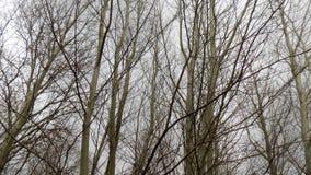 зима вектора иллюстрации предпосылки красивейшая ландшафт пущи дня солнечный Большое красивое дерево Стоковые Изображения
