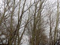 зима вектора иллюстрации предпосылки красивейшая ландшафт пущи дня солнечный Большое красивое дерево Стоковое Фото