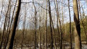 зима вектора иллюстрации предпосылки красивейшая ландшафт пущи дня солнечный Большое красивое дерево Стоковое Изображение