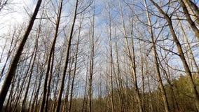 зима вектора иллюстрации предпосылки красивейшая ландшафт пущи дня солнечный Большое красивое дерево Стоковая Фотография