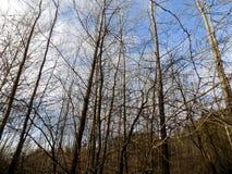 зима вектора иллюстрации предпосылки красивейшая ландшафт пущи дня солнечный Большое красивое дерево Стоковое фото RF