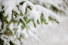 зима вектора иллюстрации предпосылки красивейшая Стоковая Фотография