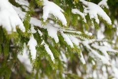 зима вектора иллюстрации предпосылки красивейшая Стоковое Изображение