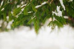 зима вектора иллюстрации предпосылки красивейшая Стоковая Фотография RF