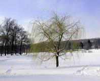 зима вербы стоковое изображение rf