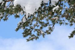 зима ветви стоковые изображения rf