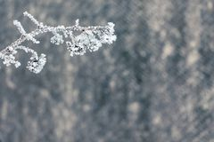 Зима, ветвь поленики, покрытая с изморозью, море права свободно стоковое фото rf