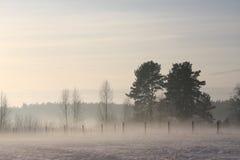 зима взгляда валов сосенки Стоковое Фото