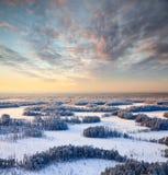 зима взгляда сверху пущи вечера морозная Стоковая Фотография