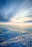 зима взгляда сверху пущи Стоковое фото RF