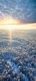 зима взгляда сверху реки утра пущи Стоковые Фото